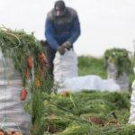 Медведев: На развитие села в 2021 году направят более 210 млрд рублей