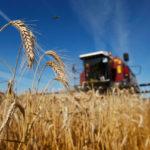Избежать дефицита. Белоруссия запретила экспорт зерна