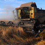 Абрамченко: Объем агроэкспорта может достичь 27 млрд долларов