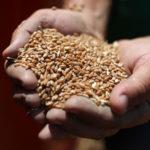 В Госдуме намерены ликвидировать «серые» схемы оборота зерна