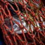 Эксперты рассказали, почему рыба в магазинах вдвое дороже, чем у рыбака